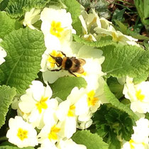 Lots of flowers for the bees