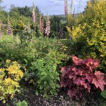 Colour across section of garden