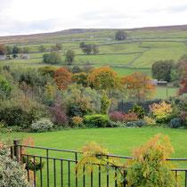Across the garden