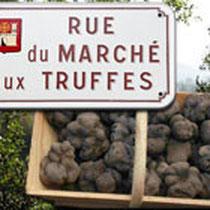 Récolte de truffes