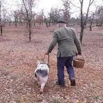 cavage avec cochon