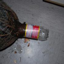 Testen ob die Flasche um den Stamm passt. Evtl. nachbessern.