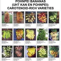 Cartel de las variedades de Pohnpei ricas en  Vitamina A