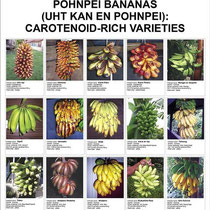 Poster des variétés de Pohnpei riches en Viatamine A - Photo : Island Food Community of Pohnpei via Flickr.