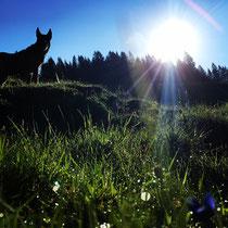 ein wunderschönen guten Morgen Blue