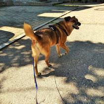 entspannter Hund im Alltag