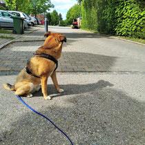 Hund macht Sitz