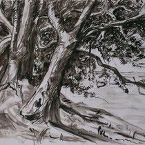 Bäume - Federzeichnung-  Zeichnung - laviert - 2009