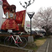 桜満開♪ 清川道の駅
