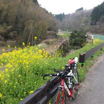 線路に菜の花&TTバイク
