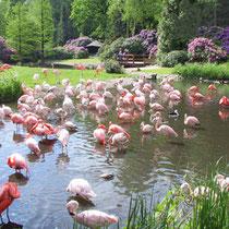 Vogelpark Walsrode —-> Homepage