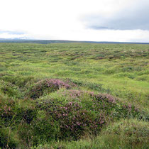 Heidelandschaft auf Lavafeld