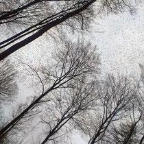 Vogelschwarm bei Hillscheid