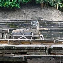 ニャック・ポアン 馬の象