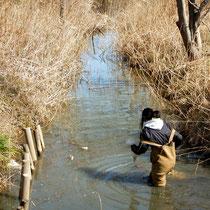 水路で一人黙々と魚を捕る