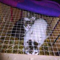 Mutter mit ihren beiden Kitten Daisy und Merlin