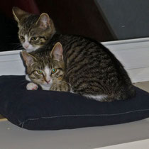 Millie & Max