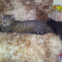 Sunny und Chino