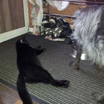 Mumfie hat sich zum Fallobst gemausert. :-)