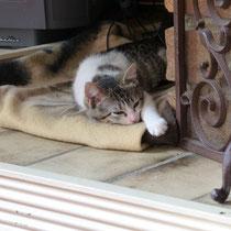 Daisy relaxt am Kamin, solange sich ihr keiner nähert.
