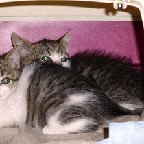 Daisy (vorne) und Merlin (versteckt sich)