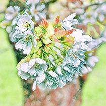 Kirschblüte Frühling Experiment