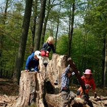 Kita waldameisen: Spass im Wald