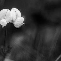 Flowers_14