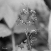 Flowers_6