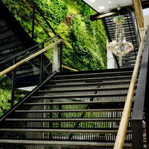 Living green walls. Quelle: http://foliageconcepts.wordpress.com/
