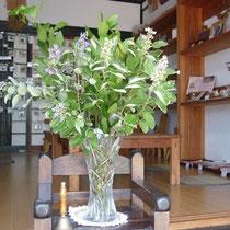 8月8日 ハマゴウ 月桂樹