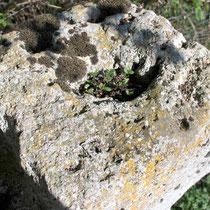 La croix en tuf de Citernes