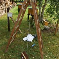 Gartenleiter mit Seil und Brett zur Schwarmaufnahme