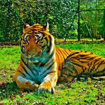 Thoiry Safari Park