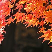 京都・真如院