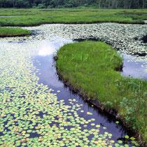尾瀬の池塘 1999年8月