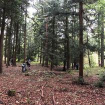 Lebensbäume bei Bad Homburg