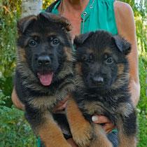 Furbo & Figo von Adeloga