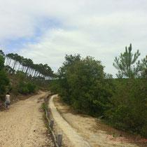 Le chemin de randonnée longe la piste cyclable, bien plus pratique. Vers l'étang de Cousseau...