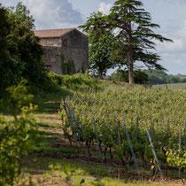 Par monts et par vaux, les chemins de randonnée sont de vrais petits bonheurs. Haux, Gironde, Aquitaine