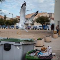 Je m'envole; (en)vol de mouette, place des Gitans, avenue de la République, les Saintes-Maries-de-la-Mer