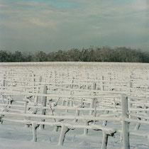 Vignoble du Château du Garde sous la neige. Commune de Cénac, 25 janvier 2007