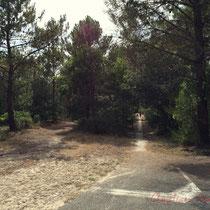 Croisement des deux pistes cyclables et du chemin de randonnée. Vers l'étang de Cousseau...