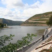 Das Rheinnaheeck, Mündung der Nahe in den Rhein