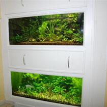 Zwei unserer Aquarien im Vereinsheim