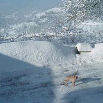 il grande inverno Bossolasco 2009