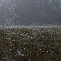Jungspinnennetze im Morgentau.