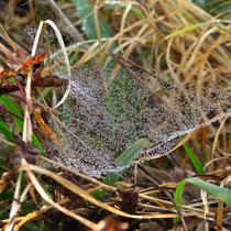 Die Netze werden im Tau sichtbar