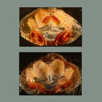 Labulla: Geschlechtsöffnung Weibchen, oben von außen unten von innen