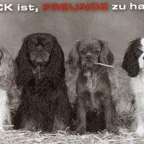 """Glück Freunde zu haben  """"Bild Quelle unbekannt"""""""